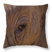 In The Eye Of The Elephant Throw Pillow