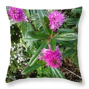 Hebe Bush In The Garden Throw Pillow