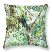 In The Moss Throw Pillow