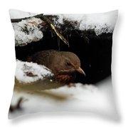 In The Shelder. Eurasian Blackbird Throw Pillow