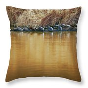 In The Sun - Turtles Throw Pillow