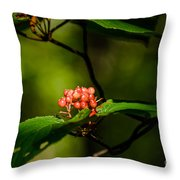Vermont---in The Wild Throw Pillow