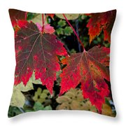 In Transition Throw Pillow