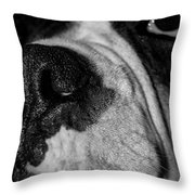 In Your Face II Throw Pillow