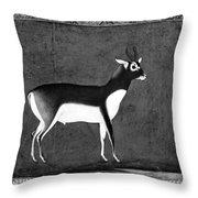 India: Black Buck Throw Pillow