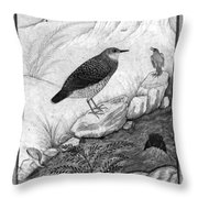 India: Water Ouzels Throw Pillow