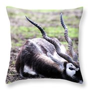 Indian Antelope Throw Pillow