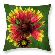 Indian Blanket Flower - Gaillardia Throw Pillow