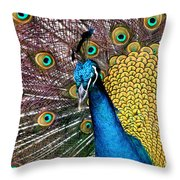 Indian Blue Peacock Throw Pillow
