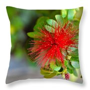 Indian Bottlebrush Flower Throw Pillow