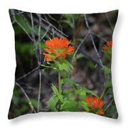 Indian Paint Brush 2 Throw Pillow