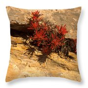 Indian Paint Brush Throw Pillow
