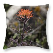 Indian Paintbrush 7 Throw Pillow