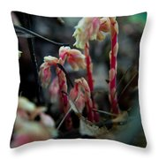 Indian Pipe 5 Throw Pillow