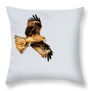 Indian Spotted Eagle Throw Pillow
