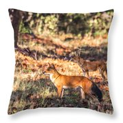 Indian Wild Dogs Dholes Kanha National Park India Throw Pillow
