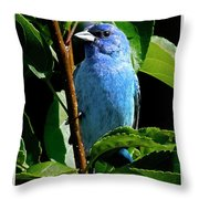 Indigo Bunting 1f, Ny, 18 Throw Pillow