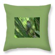 Indigo Bunting - Felts Nature Preserve - Ellenton Florida Throw Pillow