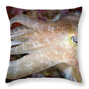 Indonesia, Cuttlefish Throw Pillow