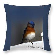 Inquisitive Bluebird Throw Pillow