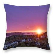 Inquisitive Flock At Dawn, Harris Throw Pillow