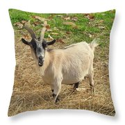 Inquisitive Goat Throw Pillow