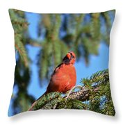 Inquisitive Male Cardinal Throw Pillow