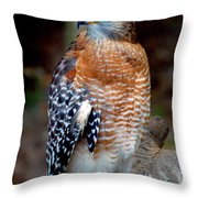 Inquisitive Red Tailed Female Hawk Throw Pillow