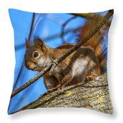 Inquisitive Squirrel Throw Pillow