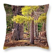 Inquisitive Whitetail Deer Throw Pillow