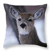 Inquisitive Yearling Throw Pillow