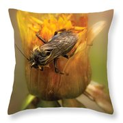 Insect - Bee - Dare To Bee Different Throw Pillow