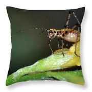 Insect And Morning Dew Throw Pillow