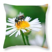 Insect Buffet Throw Pillow