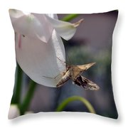 Insect In Flower Throw Pillow