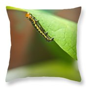 Insect Larva 2 Throw Pillow