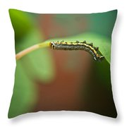 Insect Larva 4 Throw Pillow