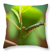 Insect Larva 5 Throw Pillow