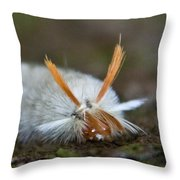 Insect Larvae With Hairdo Throw Pillow