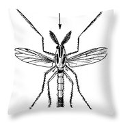 Insect: Midge Throw Pillow