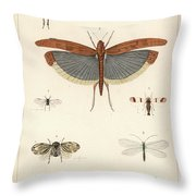 Insects, Plate IIi Throw Pillow by Antoine Sonrel