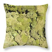 Inside Mount Kilimanjaro National Park Throw Pillow