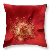 Inside The Rose Throw Pillow