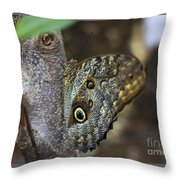 Instant Butterfly Throw Pillow