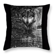 Intense Reflection Throw Pillow