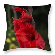 Intensely Glad Throw Pillow