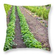 Intercropped Trees And Beans Throw Pillow