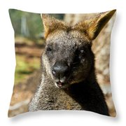 Interview With A Swamp Wallaby Throw Pillow