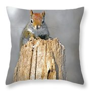 Intimate Look Throw Pillow