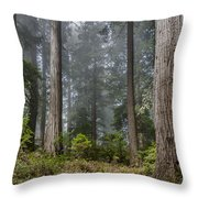 Into The Redwood Forest Throw Pillow